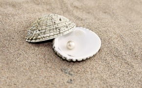 Wallpaper shell, sand, pearl