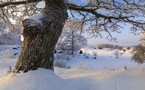 Picture winter, snow, trees, Sweden, Sweden, Sodermanland, Vagnhärad