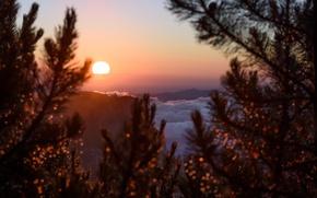 Picture twilight, sunset, mountains, clouds, sun, dusk, branches, Romania, Neamt, Ceahlau