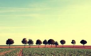 Picture field, trees, landscape, nature