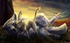 Picture autumn, cat, wolf