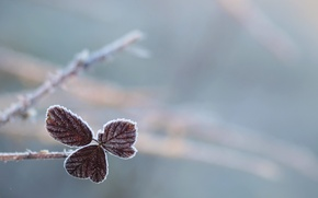 Picture frost, sheet, nature