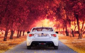 Picture road, machine, autumn, Park, white, Subaru, SUBARU BRZ