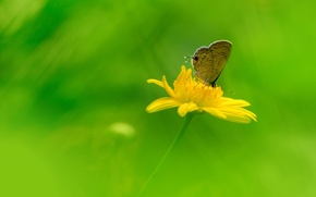 Wallpaper petals, wings, field, butterfly, insect, meadow, flower