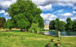 Picture greens, the sky, grass, clouds, trees, birds, pond, Park, lawn, England, London, duck, benches, Kew ...