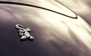 Picture Gecko, Black, Minimalism, Wiesmann Roadster MF4/MF4-S