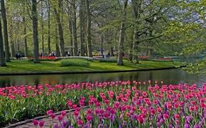 Wallpaper flowers, Keukenhof, Park, Lisse, trees, tulips, Netherlands, grass, pond