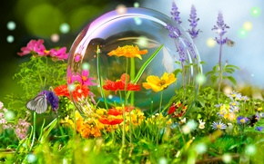 Picture flowers, nature, reflection, butterfly, ball, meadow, bubble