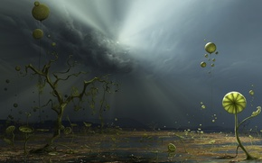Wallpaper plants, light, Clouds