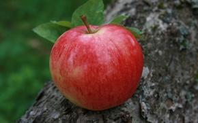 Picture macro, nature, background, Apple, food, garden, village, fruit