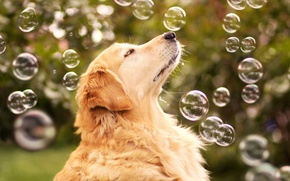 Picture bubbles, each, dog