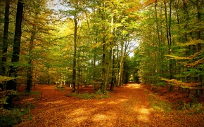 Wallpaper autumn, forest, leaves, trees, nature, photo, trail