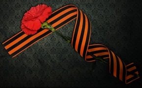 Wallpaper carnation, May 9, victory day, St. George ribbon