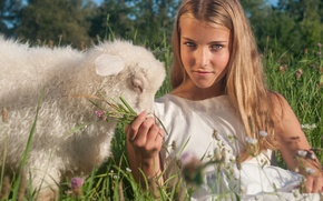 Picture summer, girl, sheep