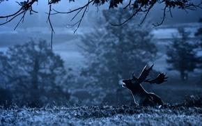 Picture landscape, deer, morning