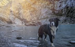 Picture animals, beach, summer, water, the sun, sunset, nature, lake, stones, black, dog, summer, black, beach, …