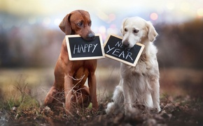 Picture dogs, signs, Happy New Year