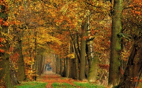 Picture forest, trees, foliage, Autumn, track, forest, falling leaves, trees, nature, autumn, leaves, path, fall