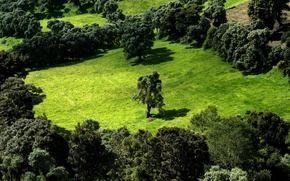 Wallpaper trees, greens, field