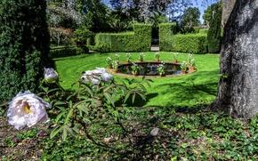 Picture trees, flowers, design, lawn, garden, CA, fountain, USA, the bushes, Filoli Gardens