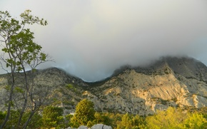 Picture trees, Mountain, cloud