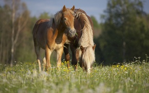 Picture summer, grass, nature, horses, company