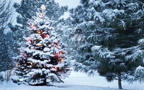 Wallpaper decoration, tree, Park, snow, Winter