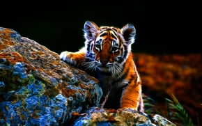 Picture cats, drawing, tiger