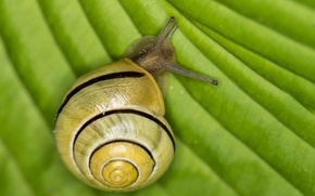Picture macro, sheet, snail