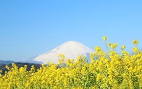 Picture the sky, flowers, mountain, Japan, Fuji