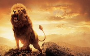 Picture Leo, Lion, The Chronicles Of Narnia, Aslan, The Chronicles of Narnia, Aslan