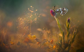 Picture flowers, glare, butterfly, glade, meadow, insect, Wallpaper from lolita777