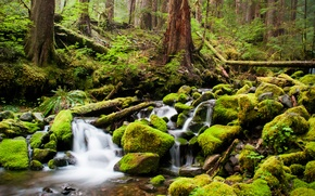 Picture stones, thicket, river, forest, trees, stream, moss