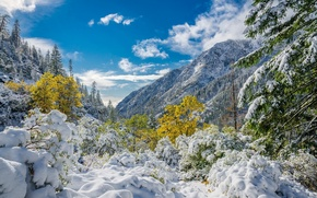 Picture the sky, clouds, snow, trees, mountains, foliage, Winter