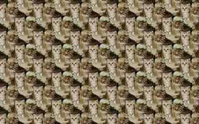 Wallpaper kitty, baby, texture, background