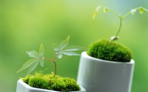 Picture greens, macro, sprouts, plants, spring, green, leaves