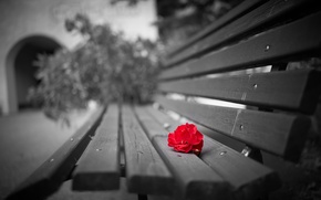 Picture flower, background, bench