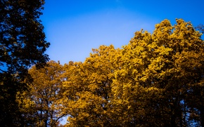Picture Sky, Blue, Sun, Autumn, Forest, Trees, Leaves, Bright, Oak