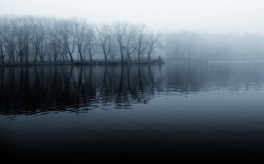 Picture forest, fog, river, shore, black and white, morning, cool