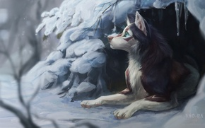 Picture winter, snow, nature, dog, Nora, by Vao-Ra