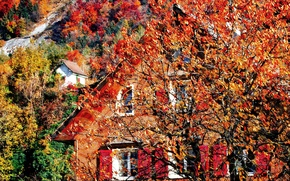 Picture tree, house, slope, mountains, autumn, leaves