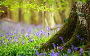 Picture forest, grass, leaves, flowers, tree, spring, trunk