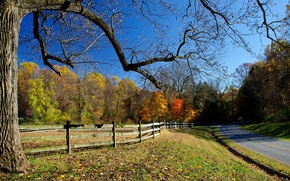 Picture road, autumn, trees, falling leaves, fence, clear skies