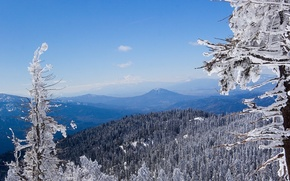 Wallpaper winter, forest, white, snow, mountains, blue