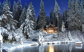 Picture winter, forest, snow, photo, beautiful