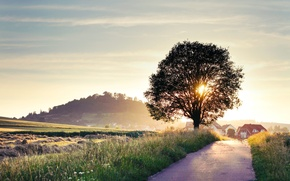 Wallpaper road, summer, the sun, rays, light, landscape, nature, background, tree, Wallpaper, home