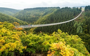 Picture autumn, forest, trees, bridge, Germany, valley, abyss, cable car, pendant, Geierlay
