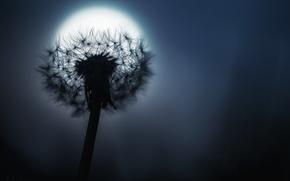 Wallpaper the moon, dandelion, night