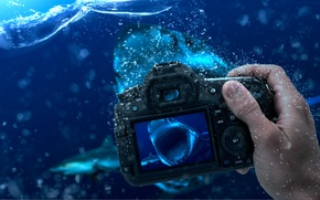 Picture Water, shark, the camera, the water level