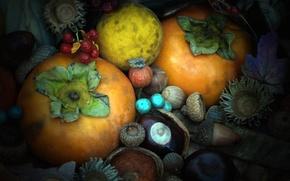 Picture autumn, texture, walnut, the fruit, acorn, chestnut, persimmon